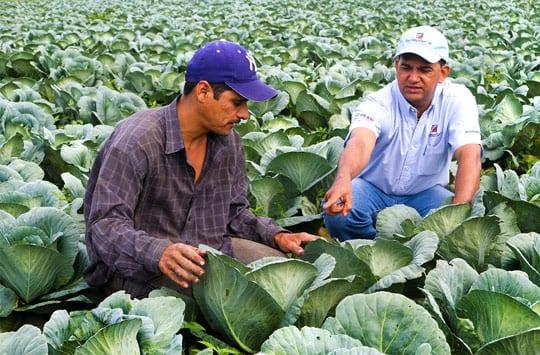 TechnoServe business advisor Roger Membreño consults with Melvin Estrada, a vegetable farmer from Nicaragua.