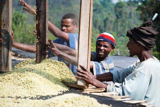 TechnoServe improving coffee industry in Ethiopia