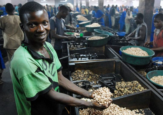 Young employee shelling cashew nuts in Mozambique