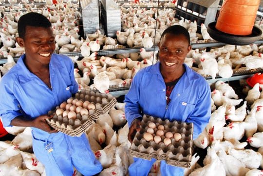 Two Mozambicans collecting eggs