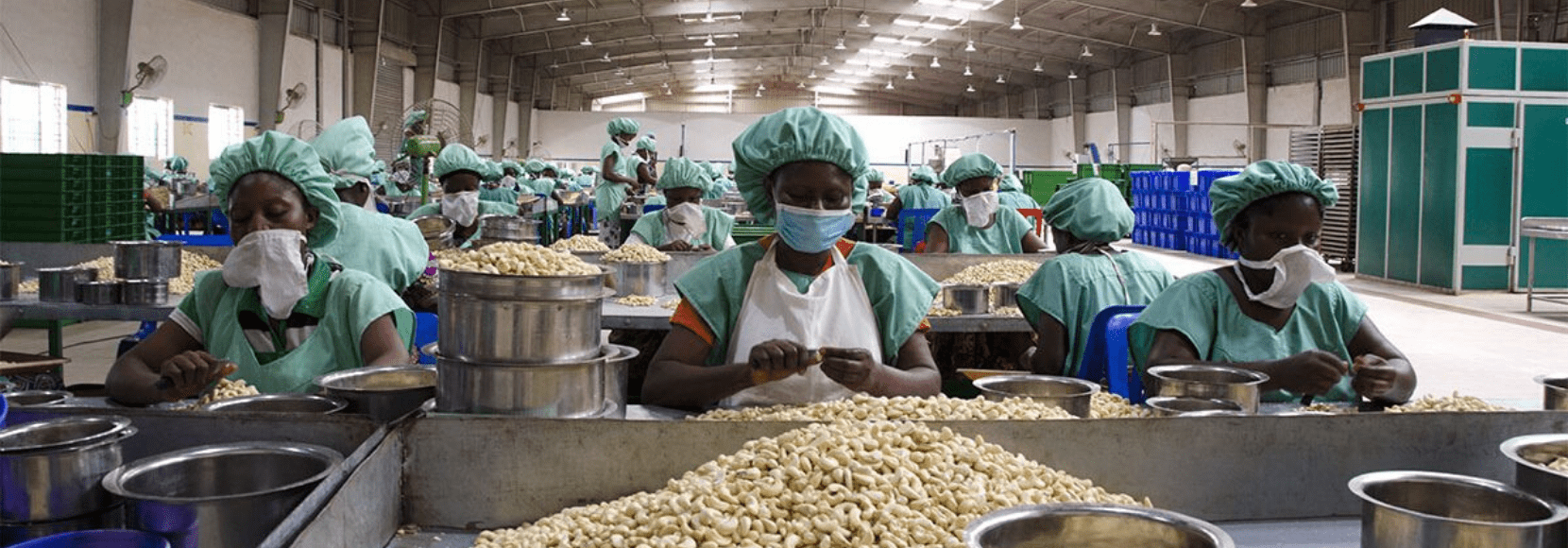 Cashew processors in Benin