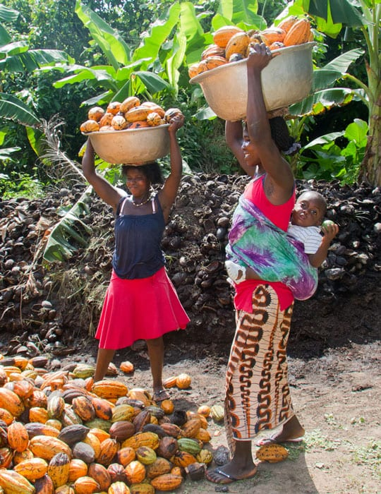 Women prepare to dump cocoa pods in Côte d'Ivoire