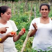 Four female farmers inspecting produce