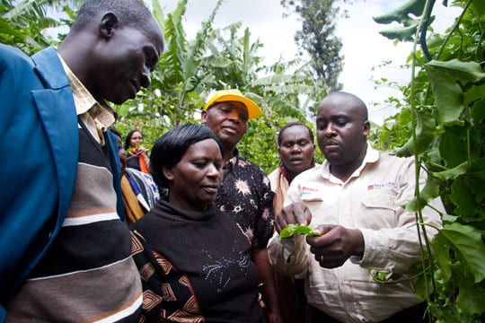 Ugandan crops being examined