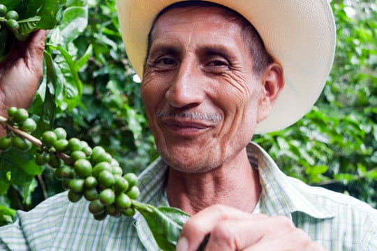 Member of the Flor del Pino cooperative in Honduras displaying berries from a coffee tree
