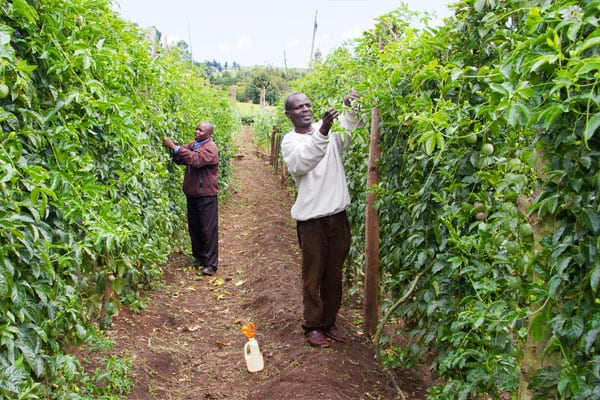 Nurturing New Opportunities for Fruit Farmers in East Africa