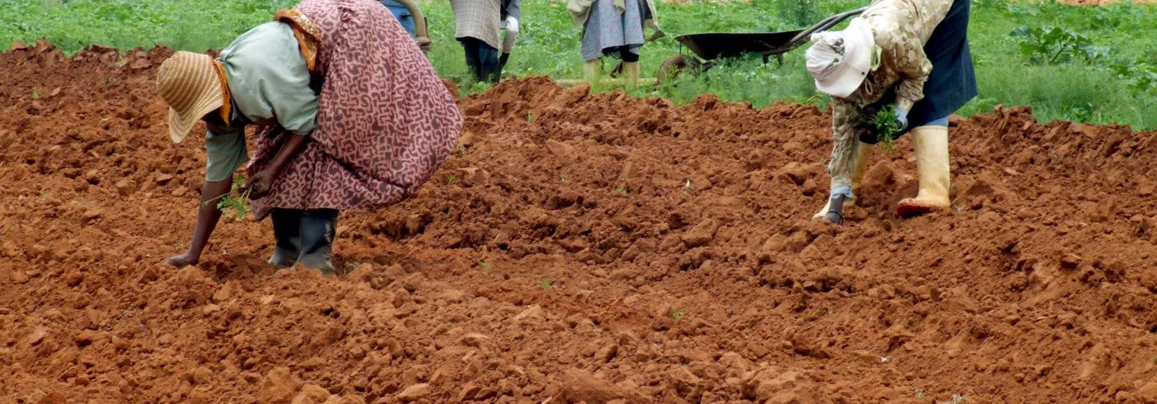 farmers getting ground prepared for planting in south africa