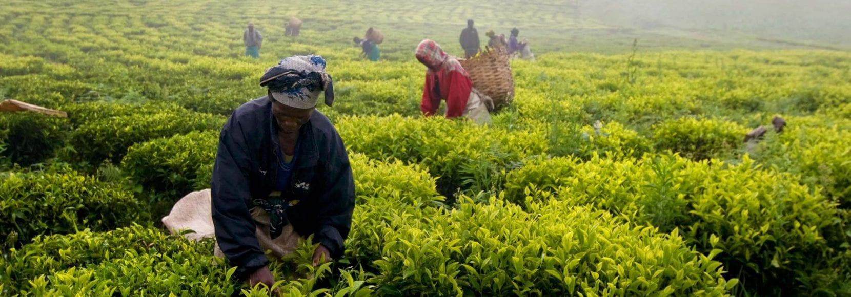 Vast farmland in Tanzania