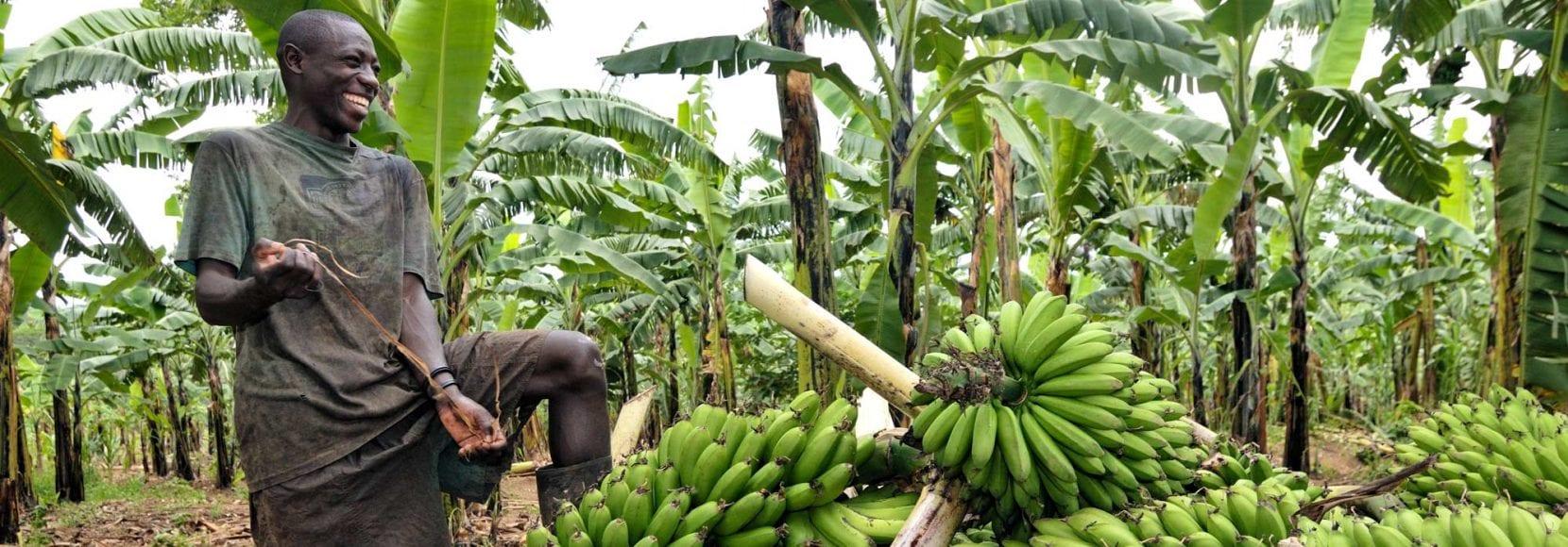 Farmer smiling with Bananas in Uganda