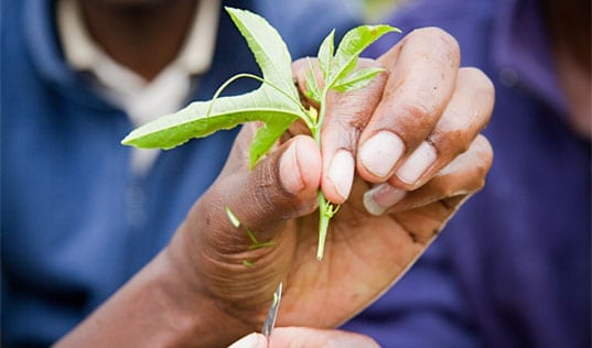 Photo of the Week: Planting Seeds for Growth in East Africa