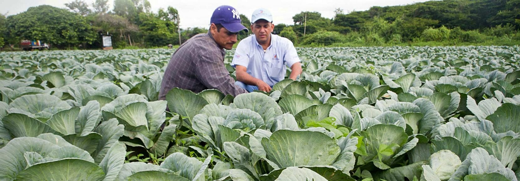 Two farmers inspecting their crops in Nicaragua