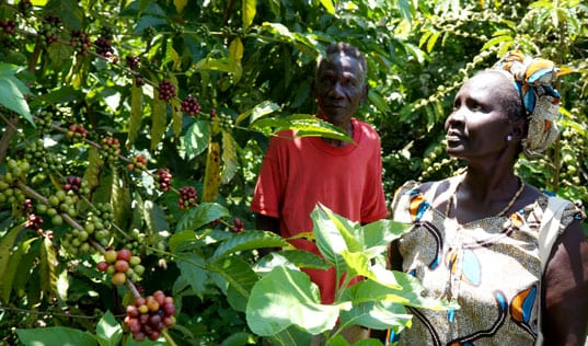 Scaling Up Coffee Sustainability in East Africa