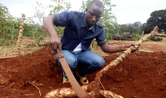 The Next Generation in African Agriculture