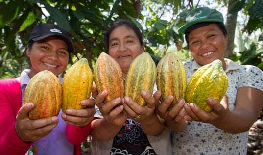 Building a Sustainable Cocoa Value Chain in Peru