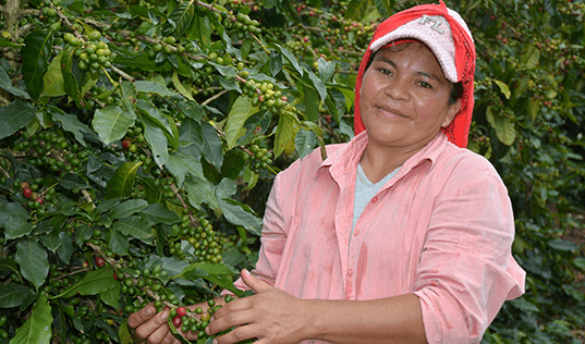 Small Coffee Farms, Increasing Returns in Honduras