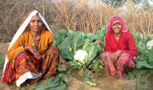 Tended by Women, Kitchen Gardens Bloom in India