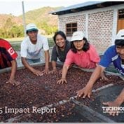 Group of farmers working to dry coffee beans