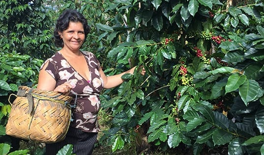 New Beginnings with Coffee in Nicaragua