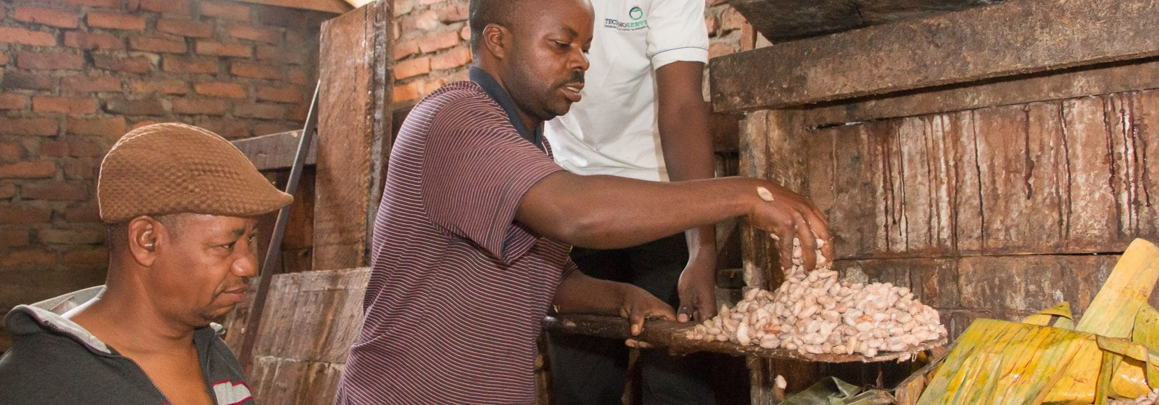 Three men working with cocoa beans