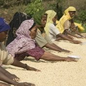 Group of Ethiopian farmers drying out coffee beans