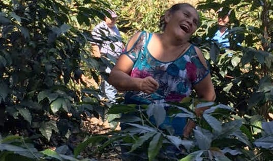 Partnering to Support Guatemala's Coffee Farmers