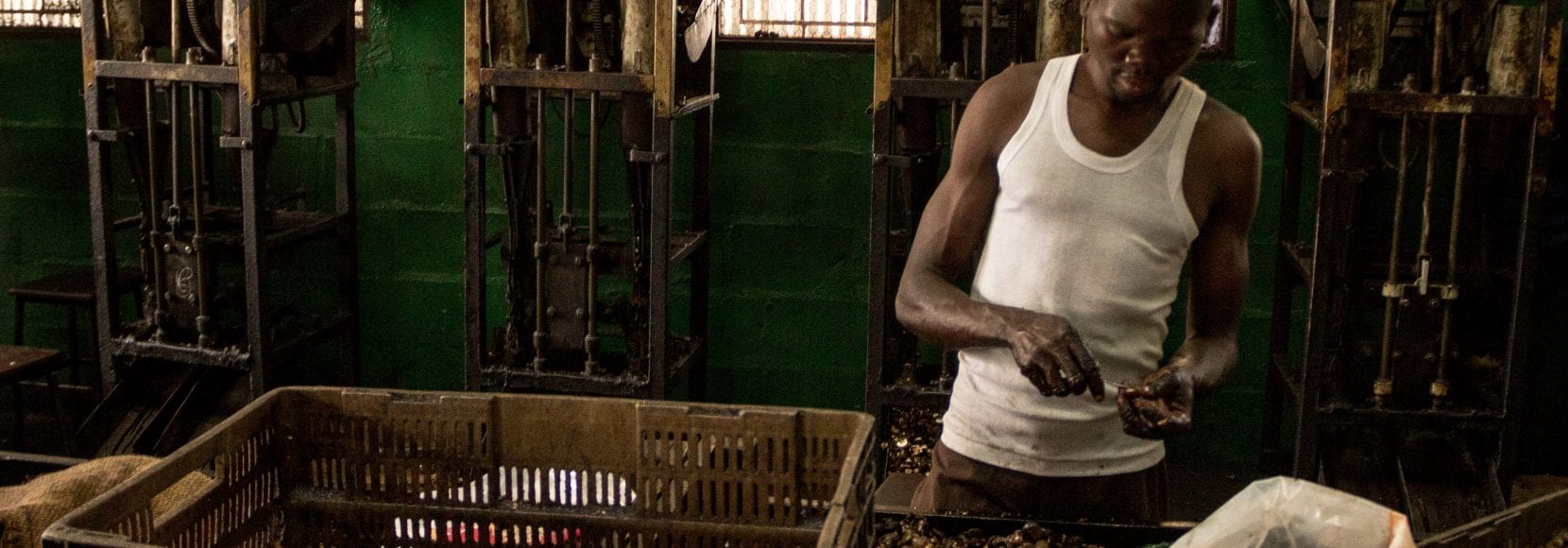 Worker hand processing cashews at Mozacaju facility