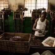 Worker hand processing cashews at Mozacaju facility