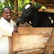 Man smiling next to his cow