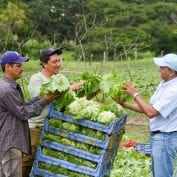Group of men inspecting their lettuce in Nicaragua