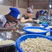 Group of workers processing cashews