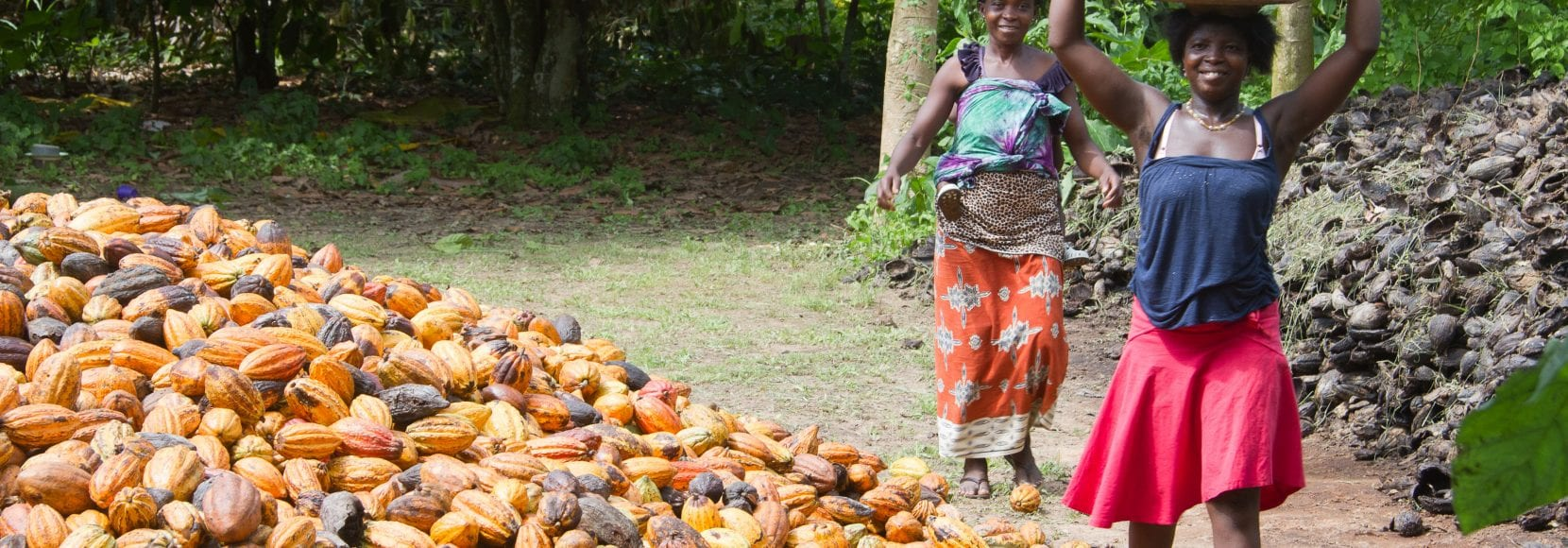 Group of farmers holding cocoa over their heads in baskets