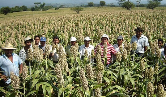 Nicaragua's Budding Seed Industry