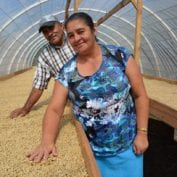 Couple smiling looking at their coffee beans drying out