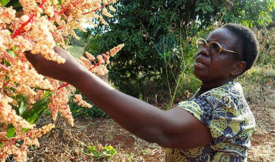 Project Nurture: Lifting African Farmers out of Poverty one Mango at a Time