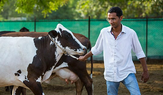 Win-Win Approach for Dairy Farmers and Businesses in India