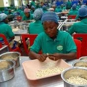 Workers processing cashews