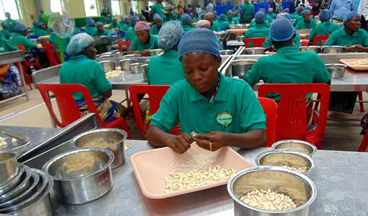 A New Model for Benin's Cashew Industry