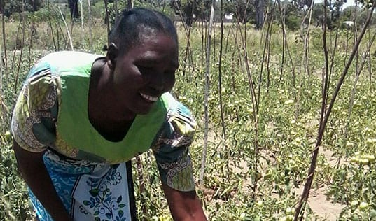 Healthy Harvests for Kenya's Vegetable Farmers