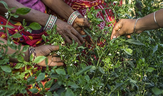 Women Cultivate Backyard Bounty