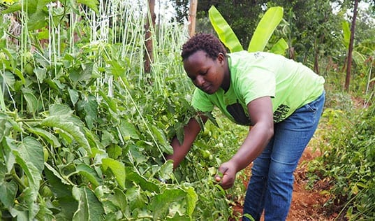 A Resilient Crop for a Resilient Woman