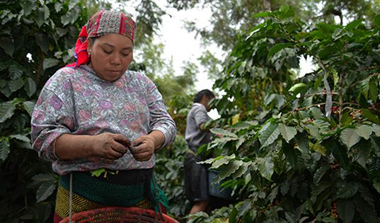 Key Insights to Create Change in Central America's Coffee Sector