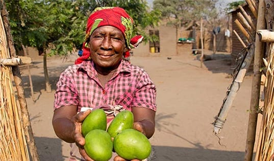 Innovative Finance for the Future of Agriculture in Mozambique