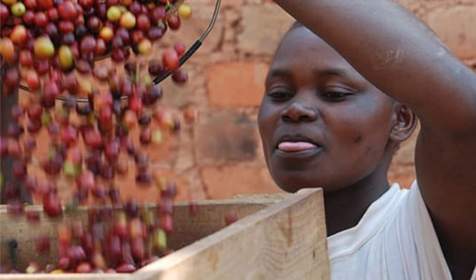 Time to Get Comfortable with Complexity: Insights from TechnoServe's East Africa Coffee Initiative