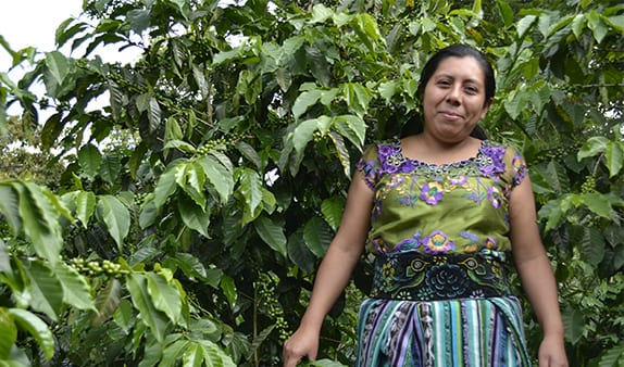 Training to Transform the Future of Coffee in Guatemala