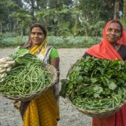 Vegetable farmers Bindu Devi and Macho Devi, members of a Farmer's Producer Group, carry their vegetables in a basket