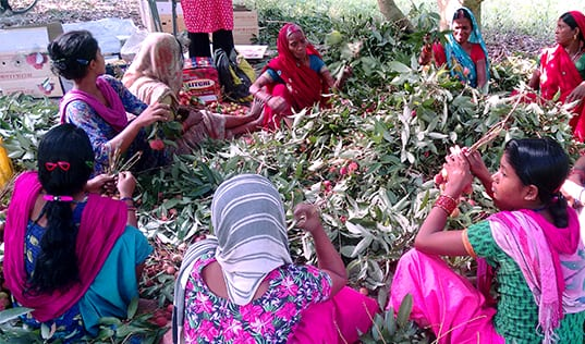 Women-led Farms and Producer Organizations are Recreating the Litchi Value Chain in India