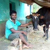 Man smiling with cow in India