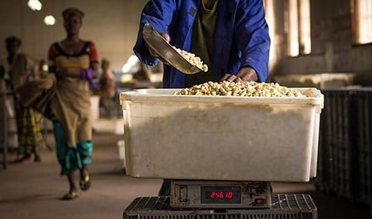 Creating Change for Mozambique's Cashew Sector through Processing