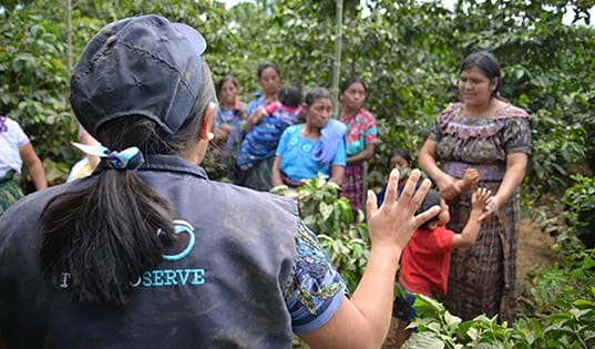 What Does it Look Like to Build a More Sustainable Future for Guatemala's Coffee Farmers?