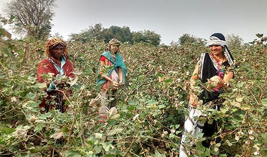 Cultivating Change for Women Farmers through Cotton